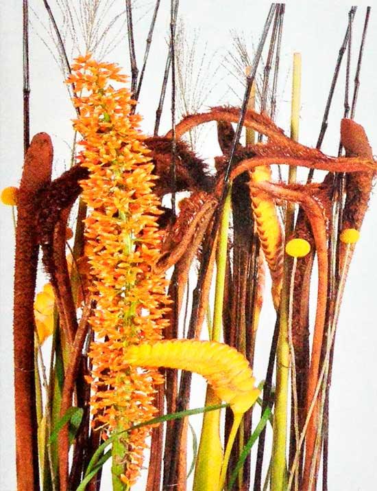 Diseno-elegante-heliconias-eneas-detalle