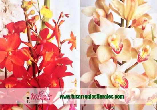 Lindas-orquideas-para-decoracion-de-eventos