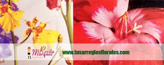 Orquidea-mocara-decoracion-floral