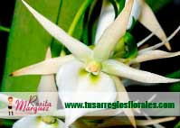 Arreglo-floral-Angraecum-orquidea