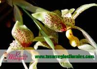 Stanhopea-Arreglos-florales