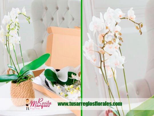 cajas-arreglos-florales-disenos
